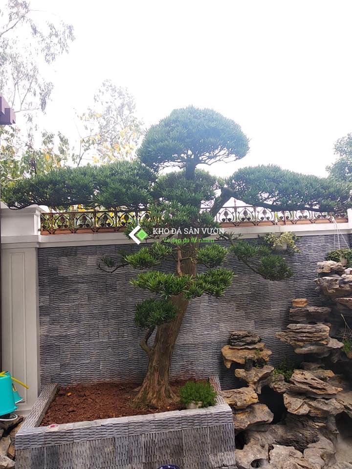 Đá răng lược đen là sản phẩm hoàn toàn bằng đá tự nhiên, bề mặt đá mạnh mẽ, nên sử dụng được cả trong nhà lẫn ngoài trời. Sử dụng đá răng lược đen ốp tường, thác nước, tranh đá, trang trí tiểu cảnh, sân vườn… tạo cảm giác tự nhiên và không gian sống gần gũi với thiên nhiên.
